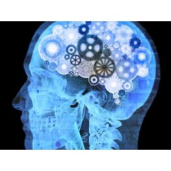 €19 Neuropsychology Diploma Course