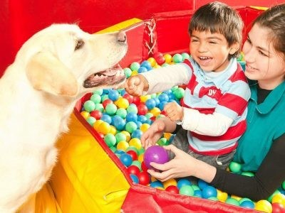 €29 Animal Assisted Therapy Diploma Course