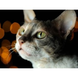 €29 Crystal Healing for Animals Diploma Course