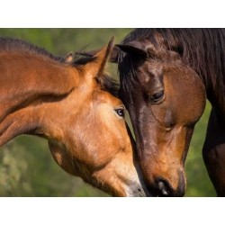 €29 Equine Psychology Diploma Course