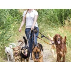 €29 Canine Business Diploma Course