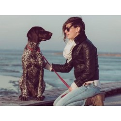 €29 Canine Communication Diploma Course