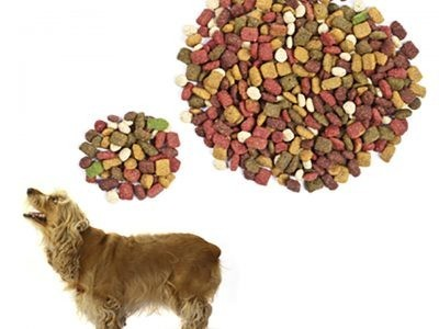 €29 Canine Nutrition Diploma Course