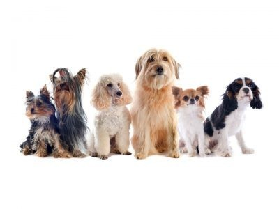 €29 Dog Grooming Diploma Course