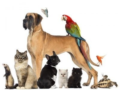 €29 Pet Care Business Diploma Course