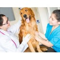 €29 Veterinary Assistant Diploma Course