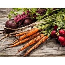 €29 Organic Gardening Diploma Course