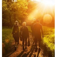 €29 Shinrin Yoku - Forest Bathing Diploma Course Online