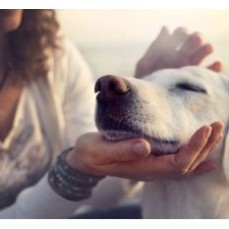 €29 CBD Oil for Animals Diploma Course