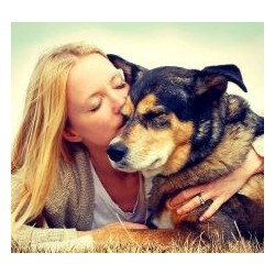 €29 Animal Welfare Diploma Course Online