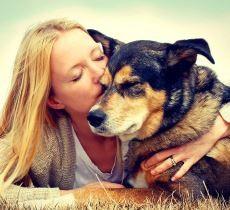 €29 Animal Welfare Diploma Course Online