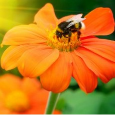 €29 Natural Beekeeping Diploma Course Online
