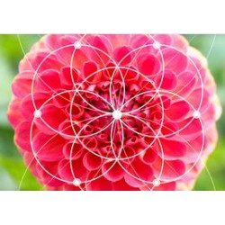 €29 Fibonacci Numbers and the Golden Ratio Diploma Course Online