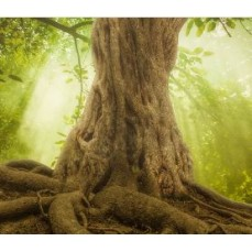 €29 The Secret Life of Trees Diploma Course Online