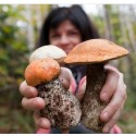 €29 Foraging Diploma Course Online