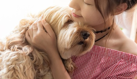 €29 Understanding Canine Anxiety Diploma Course Online