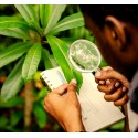 €29 Botany Diploma Course Online