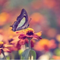 €29 Entomology Diploma Course Online