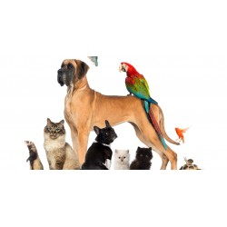 €8. Was €199. Animal Care Online Course.